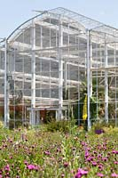 North American perennial prairie meadow and Glasshouse, RHS Gardens Wisley.