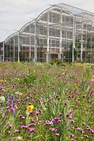 North American prairie meadow and Glasshouse with Dianthus, Echinacea, Oenothera and Penstemon, RHS Gardens Wisley.