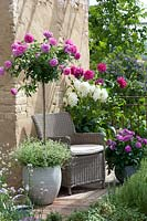 Garden seat surrounded by potted Roses and Dahlias.