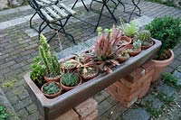 Trough of cacti and succulents in terracotta pots.