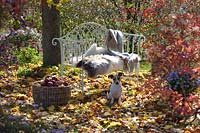 View of dog by garden bench and fur blanket under a tree, surrounded by fallen leaves.