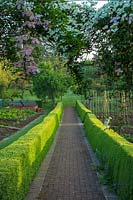 View down paved path edged with clipped Buxus hedging, Bickham House, Devon, UK.
