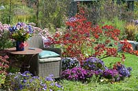 Wicker garden chair by autumnal border, with Cotinus - Smoke tree - and flowering Aster.
