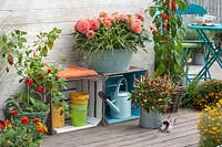 Modern terrace with wooden crates and potted peppers, chillies and dahlias.