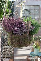 Planted hanging basket with heather
