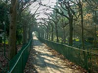 Pleached Lime walkway. Birdcage walk, Clifton, Bristol