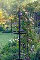 Clematis 'Frances Rives' seedheads growing over metal plant support, Elworthy Cottage, Somerset, UK
