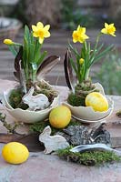 Daffodils in moss balls with Easter eggs