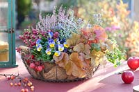 View of mixed planted autumnal wire basket.