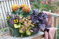 Autumnal basket with Heuchera, Pansy and Chrysanthemum.