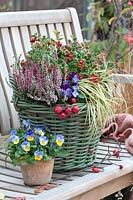 Mixed basket with evergreen perennials on garden bench.