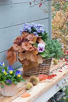 Basket with purple bells, aster and trippmadame