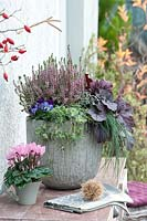 Deep grey container with Calluna - Heather and purple leaved Heuchera.