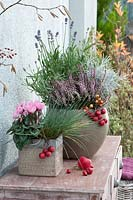 Autumn arrangement with cyclamen, heather and lavender