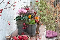 Autumn arrangement with cyclamen and heather