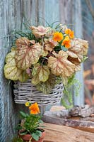 Basket with purple bell 'Champagne' and horned violet