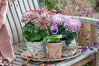 Decorative chrysanthemums in fabric bags displayed on garden bench.