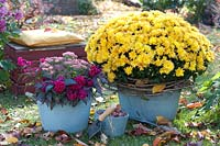 Potted plants in autumnal garden, including Chrysanthemum, Sedum and Celosia.
