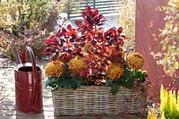 Basket and watering can with chrysanthemum and wig shrub