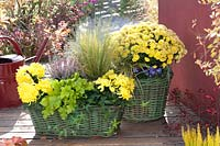 Wicker baskets of yellow and green plants, including lime Heuchera and yellow flowering Chrysanthemums.