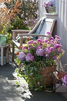 Bsket of chrysanthemums and wooden bench