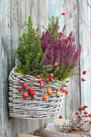 Basket with sugarloaf spruce and bud heather