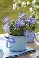Blue spring table decoration with anemones