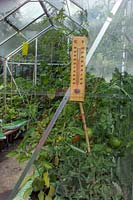 View inside a greenhouse featuring a thermometer and ripening tomatoes