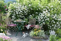 Patio with seating area besides Rosa - rose - bushes, container planting and pet dog