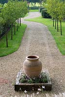 View of gravel driveway, lined with avenue of Prunus serrula, with focal point of Terracotta Tuscan oil jar.