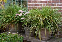 Carex in terracotta pots, with Hydrangea macrophylla in the lower terrace.