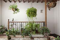 Part-covered patio with painted white walls and a variety of tender plants - Colombia
