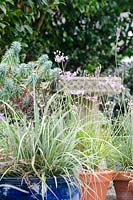 Assortment of pots with ornamental grasses and Astelia chathamica 'Silver Spear'.