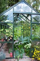 The kitchen garden glasshouse with courgettes and tomatoes.