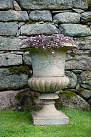 Ceramic urn container with Geranium 'Pink Spice' in front of a dry stone wall.
