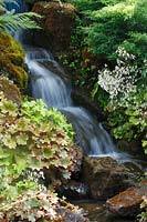 Waterfall with Saxifraga stolonifera 'Kinki Purple' at RHS Wisley