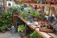Greenhouse with potting bench and tools