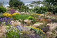 Extensive planting of ornamental grass Stipa tenuissima interplanted with