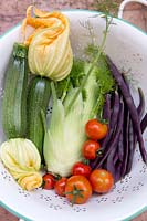 Fresh vegetables from allotment in colander including courgettes, fennel, purple French beans and tomato 'Gardeners' Delight'