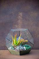 Pentagon Glass Terrarium