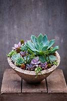 A selection of succulents planted in up a container.