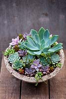 Succulents planted in bowl
