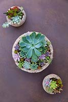 A display of several containers planted up with a collection of different succulents.