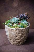 Echeveria 'Desert Harmony' and Pachyveria 'Blue Mist' in natural container.