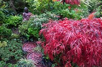 Mixed acer and conifer planting in Four Seasons Oriental garden