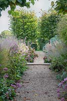 Pathway with Tilia x europea pleached limes, grasses, Hydrangea, Euphorbia and Anemone, Oxfordshire