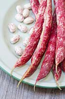Phaseolus vulgaris - Borlotto lingua di fuoco 2 - Freshly harvested Borlotti beans on an enamel plate