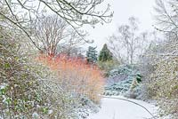 Shrubs borders with Lonicera x purpusii, Salix irrorata and Cornus sanguinea
