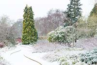 View towards shrub border with Mahonia x media 'Winter Sun' and