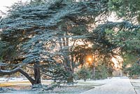 The Main Avenue in Cambridge Botanic Gardens in winter with mature cedar and pine trees.